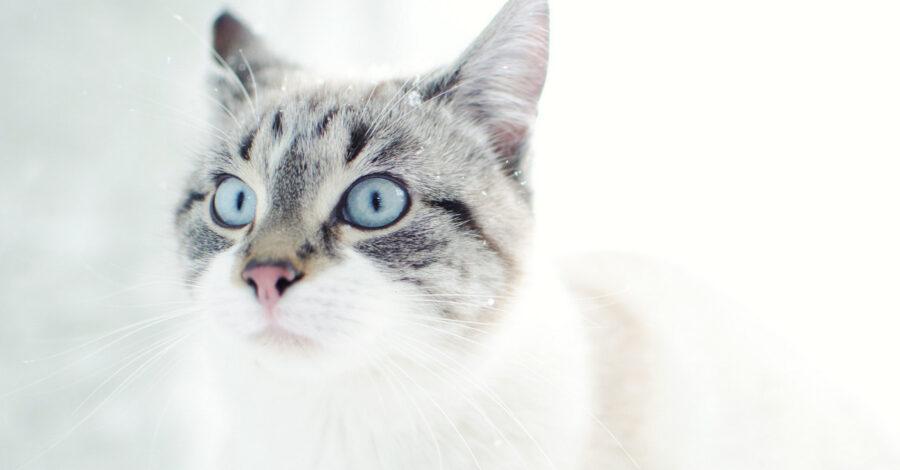 10 mačjih zapovedi