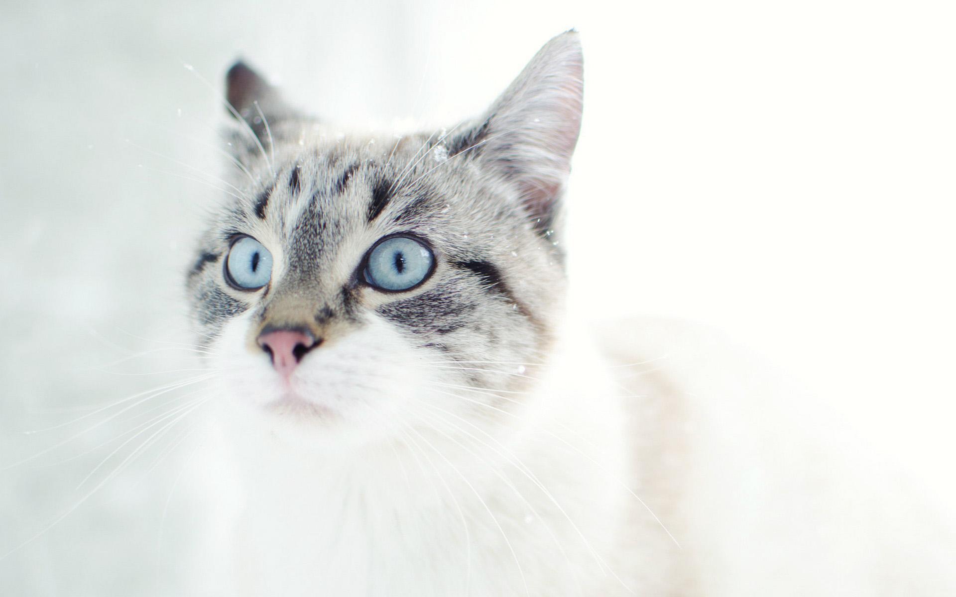 10 mačjih pravil