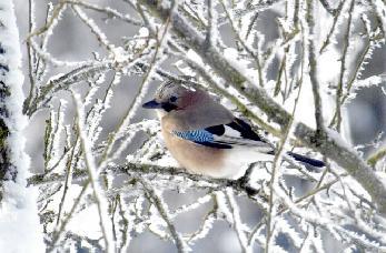 ptice_pozimi-hrana