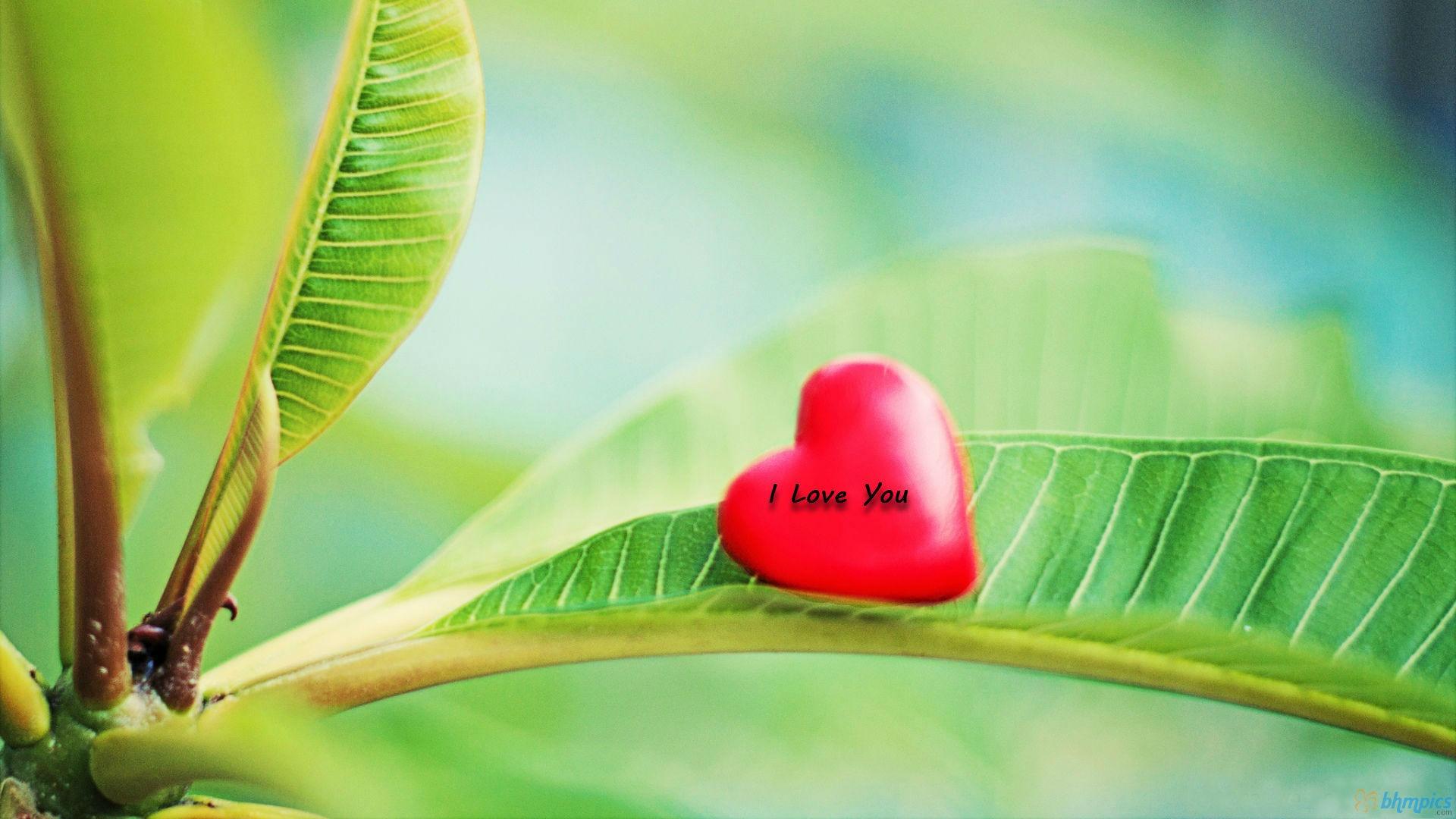 Kadar hodim po svežini jutranjih ros in slišim milino nežnega petja ptic, se mi telo napolni z radostjo in mirom, ki je vse le ena sama ljubezen. Življenje, res si lepo.