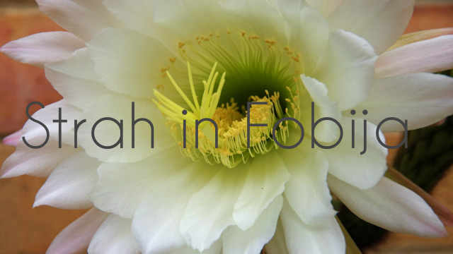 Strah in Fobija