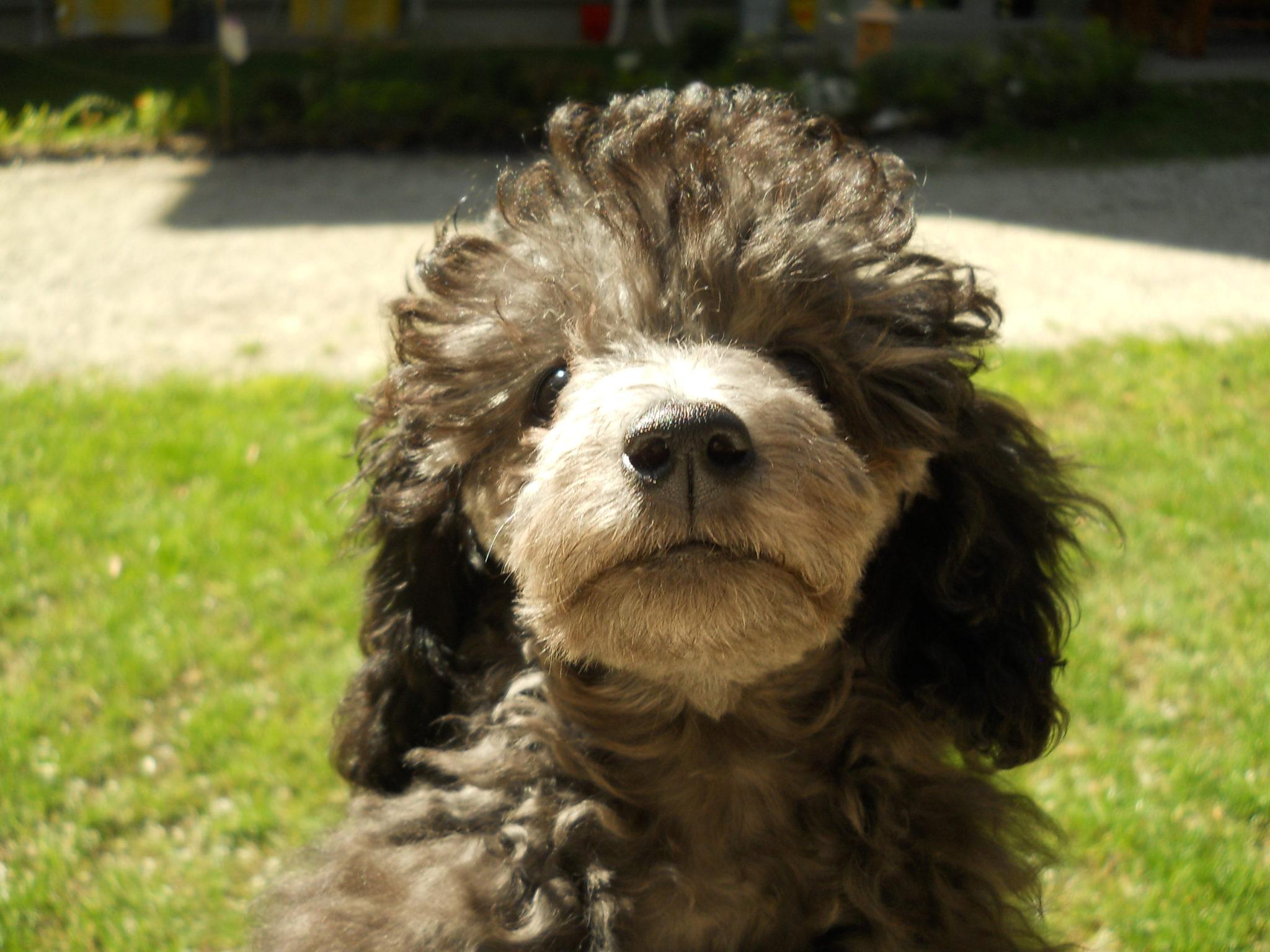 Psi pridejo z razlogom pes moj terapevt